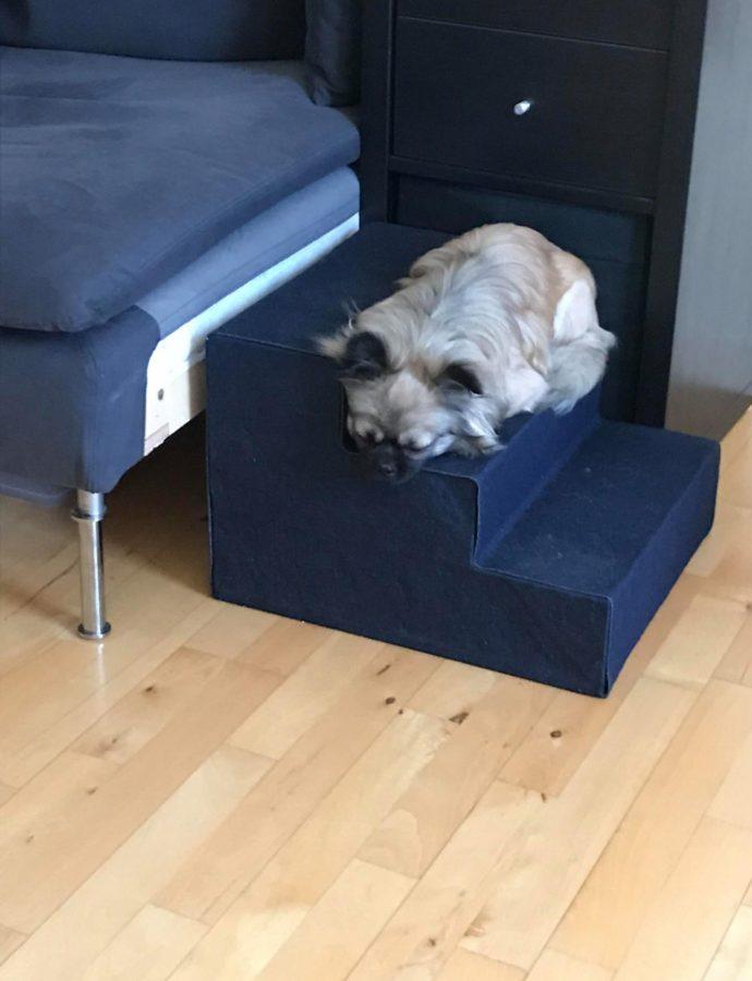Bailey her på sin egen nye hundetrappe.