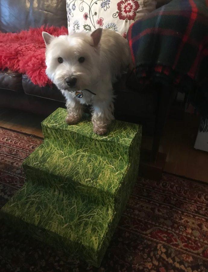 Diva og sin hundetrappe.