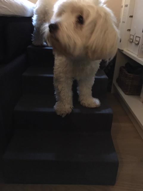 Lækre Coco er står og hygger midt på trappen