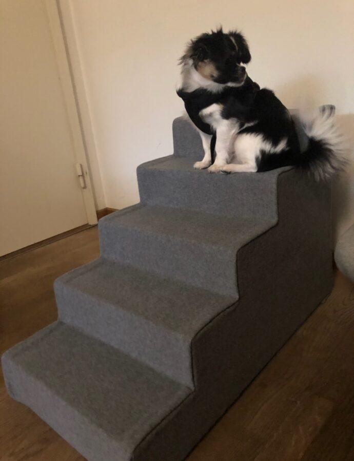 Lille Lea på bare 6 måneder prøver sin nye trappe