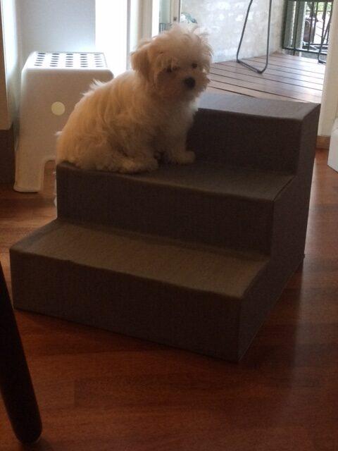 Fine lille Pondus tager sig et hvil på trappen inden han forsætter sin leg