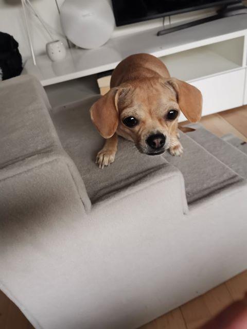 Lille bitte Aye har fået en trappe med 5 trin i sandfarvet fleece, så hun sikkert kan komme op og ned af sengen