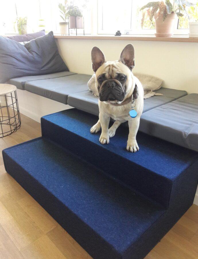 Hubert har fået sin egen hundetrappe på 1 meter lang. Nu kan han sikkert komme op og ned af bænken