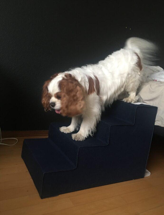 Loui har fået en trappe der passer