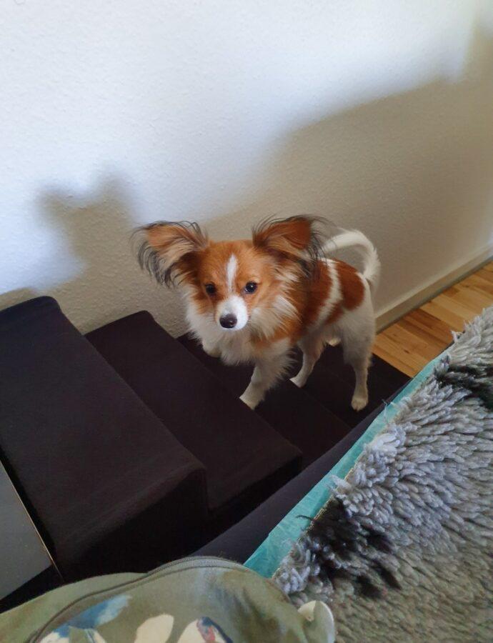 Vilma fik sig en trappe