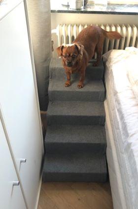 Smukke Bella sidder så fint på sin trappe ved sengen