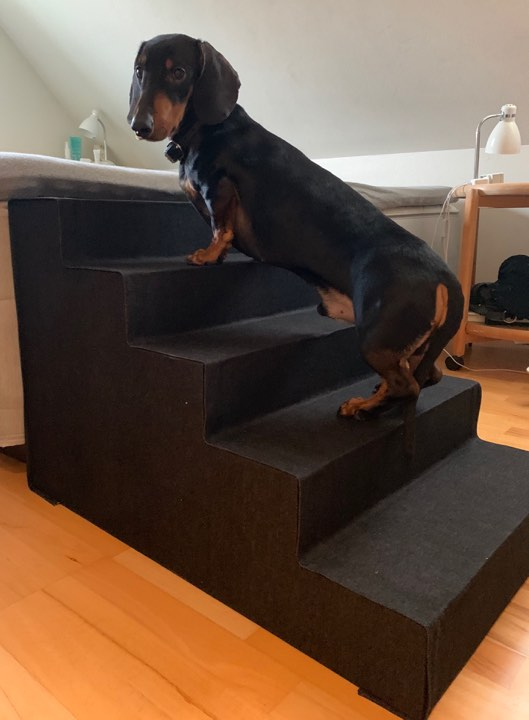Flotte Hugo på sin special trappe